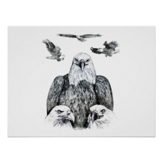 Bald Eagle Collage Pencil drawing sketch Posters