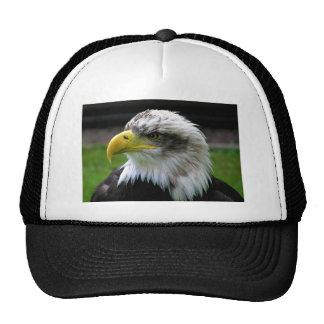Bald Eagle Combe Martin Wildlife & Dinosaur Park Trucker Hat