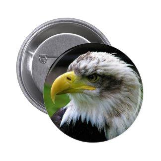Bald Eagle Combe Martin Wildlife & Dinosaur Park Pinback Button