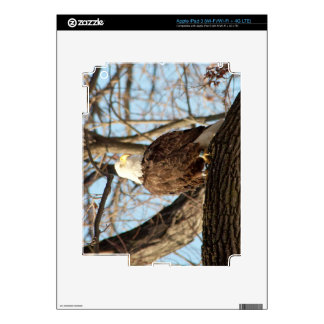 Bald Eagle Decals For iPad 3