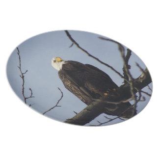 Bald Eagle  Dinner Plate