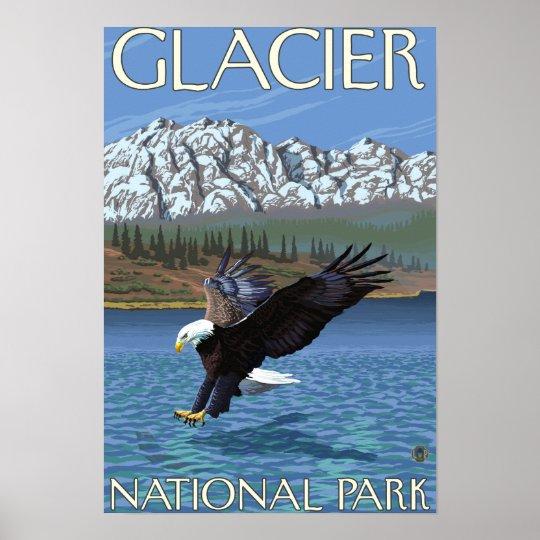 Bald Eagle Diving - Glacier National Park, MT Poster
