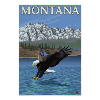 Bald Eagle Diving - Montana Poster