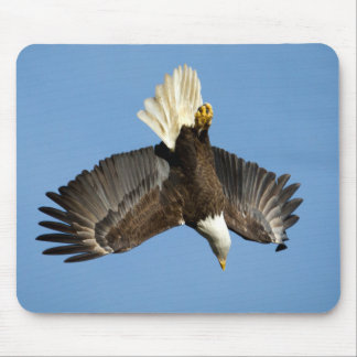 Bald Eagle diving towards the water Mouse Pad