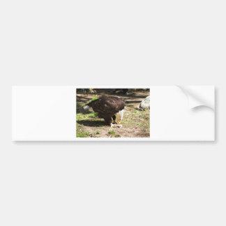 Bald Eagle Eating His Prey Bumper Sticker