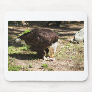 Bald Eagle Eating His Prey Mouse Pad