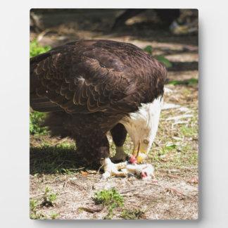 Bald Eagle Eating His Prey Plaque