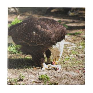 Bald Eagle Eating His Prey Ceramic Tile
