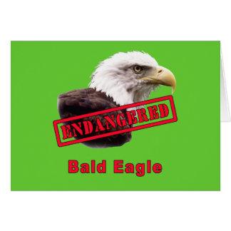 Bald Eagle Endangered Species Card
