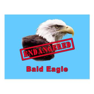 Bald Eagle Endangered Species Postcard