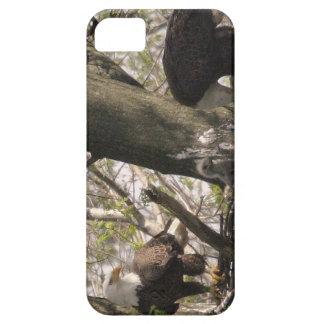 Bald Eagle Family iPhone 5 Case