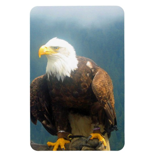 Bald Eagle Flexi Magnet
