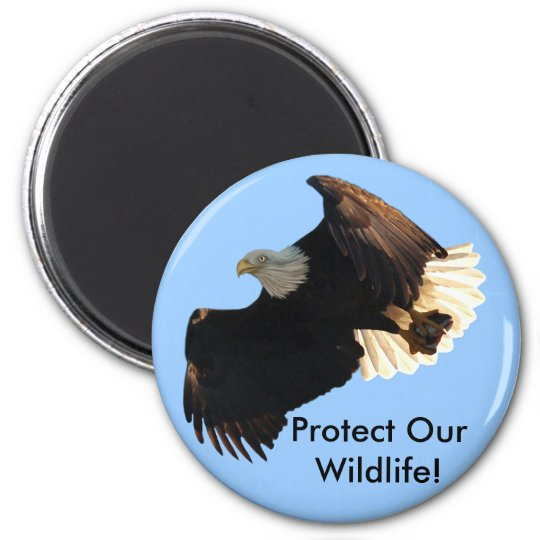 Bald Eagle Flight Collection II Magnet