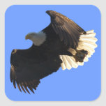 Bald Eagle Flight Collection II Stickers