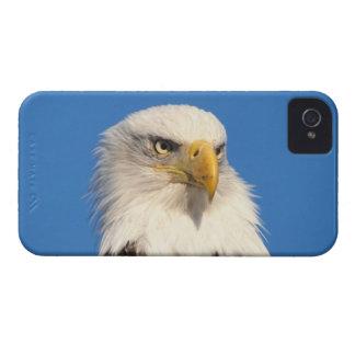 bald eagle, Haliaeetus leuccocephalus, 2 iPhone 4 Covers