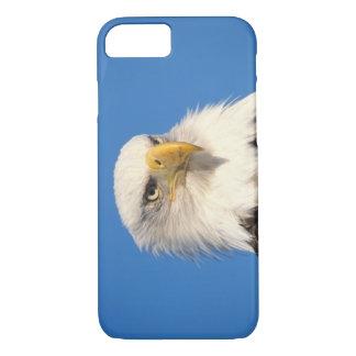 bald eagle, Haliaeetus leuccocephalus, 2 iPhone 8/7 Case