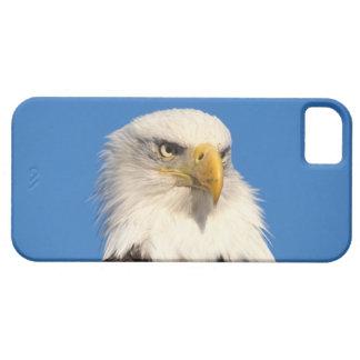 bald eagle, Haliaeetus leuccocephalus, 2 iPhone SE/5/5s Case