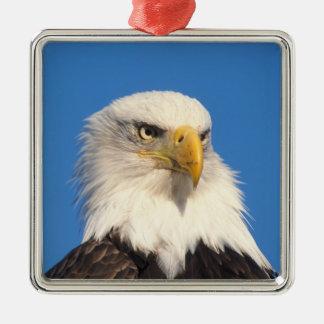 bald eagle, Haliaeetus leuccocephalus, 2 Metal Ornament