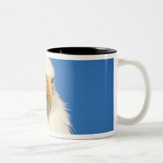 bald eagle, Haliaeetus leuccocephalus, 2 Two-Tone Coffee Mug