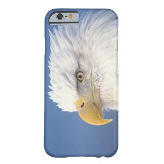 bald eagle, Haliaeetus leuccocephalus, Barely There iPhone 6 Case