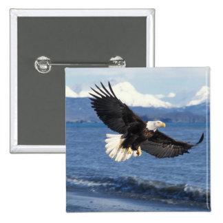 bald eagle, Haliaeetus leuccocephalus, in flight Pinback Buttons