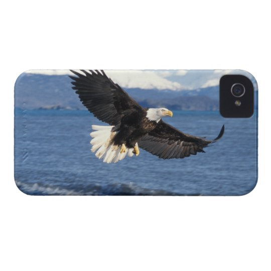 bald eagle, Haliaeetus leuccocephalus, in flight iPhone 4 Cover