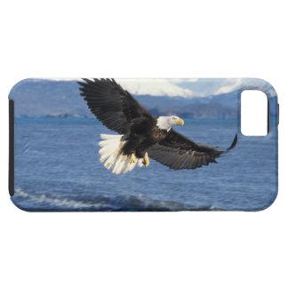 bald eagle, Haliaeetus leuccocephalus, in flight iPhone SE/5/5s Case