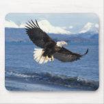 bald eagle, Haliaeetus leuccocephalus, in flight Mouse Pad