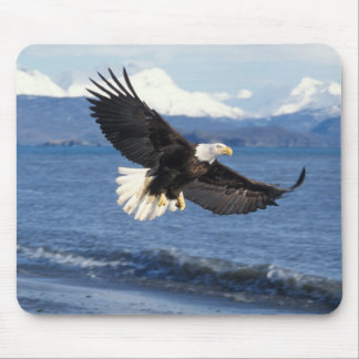 bald eagle, Haliaeetus leuccocephalus, in flight Mouse Pad