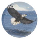 bald eagle, Haliaeetus leuccocephalus, in flight Party Plate