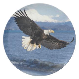 bald eagle, Haliaeetus leuccocephalus, in flight Plate