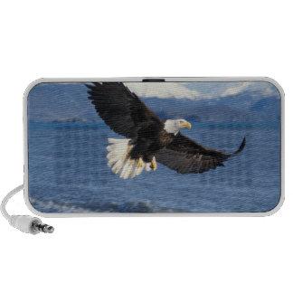 bald eagle, Haliaeetus leuccocephalus, in flight iPhone Speaker