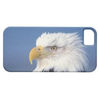 bald eagle, Haliaeetus leuccocephalus, iPhone SE/5/5s Case