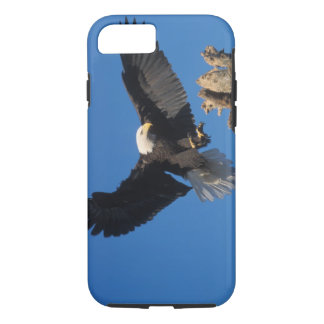 bald eagle, Haliaeetus leuccocephalus, landing iPhone 8/7 Case