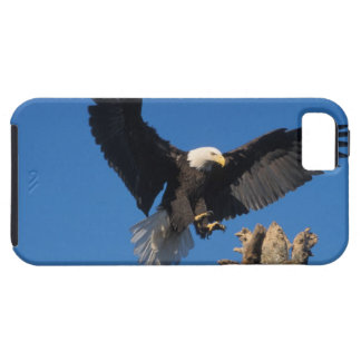 bald eagle, Haliaeetus leuccocephalus, landing iPhone SE/5/5s Case