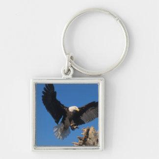 bald eagle, Haliaeetus leuccocephalus, landing Keychain