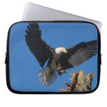 bald eagle, Haliaeetus leuccocephalus, landing Laptop Computer Sleeves