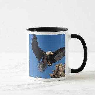 bald eagle, Haliaeetus leuccocephalus, landing Mug