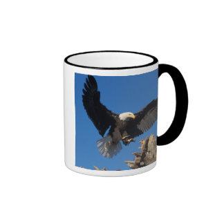 bald eagle, Haliaeetus leuccocephalus, landing Ringer Mug