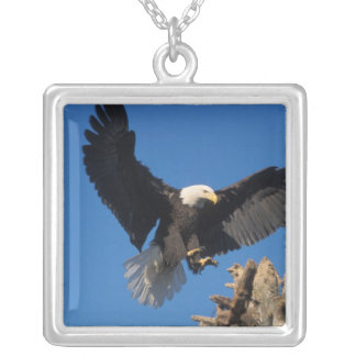 bald eagle, Haliaeetus leuccocephalus, landing Square Pendant Necklace