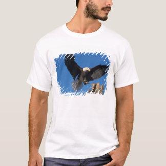 bald eagle, Haliaeetus leuccocephalus, landing T-Shirt