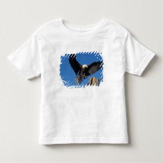 bald eagle, Haliaeetus leuccocephalus, landing Shirts