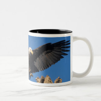 bald eagle, Haliaeetus leuccocephalus, landing Two-Tone Coffee Mug