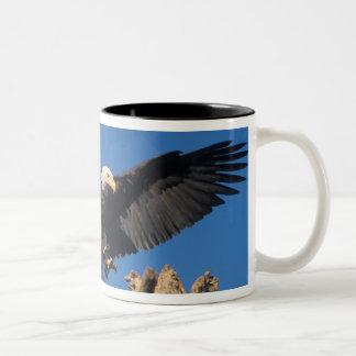 bald eagle, Haliaeetus leuccocephalus, landing Two-Tone Coffee Mug
