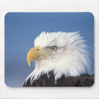 bald eagle, Haliaeetus leuccocephalus, Mouse Pad