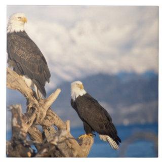 bald eagle, Haliaeetus leuccocephalus, pair Ceramic Tile