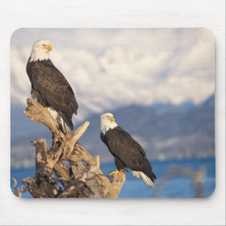 bald eagle, Haliaeetus leuccocephalus, pair Mouse Pad