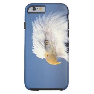 bald eagle, Haliaeetus leuccocephalus, Tough iPhone 6 Case
