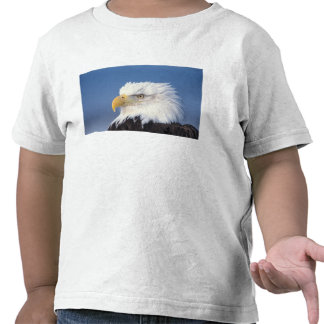 bald eagle, Haliaeetus leuccocephalus, Tee Shirts