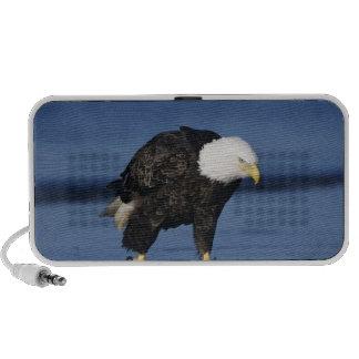 Bald Eagle, Haliaeetus leucocephalus,adult iPod Speaker